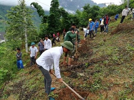 Các lực lượng giúp nhân dân Bản On đào hố chuẩn bị trồng quế
