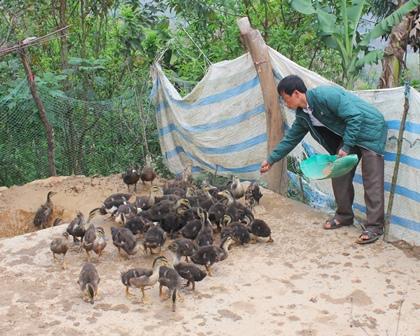 Anh Cứ A Seng chăm sóc đàn vịt của gia đình