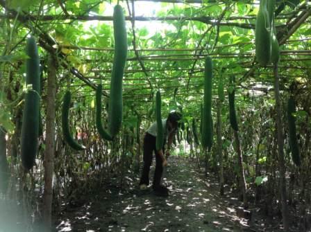 Hội viên Hội Nông dân Việt Nam tỉnh tích cực tăng gia sản xuất, phát triển kinh tế hộ gia đình