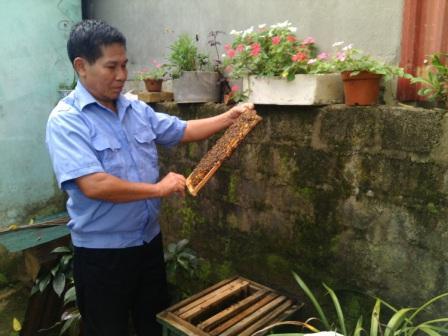 Cựu chiến binh Lê Văn Hiền đang kiểm tra đàn ong nuôi