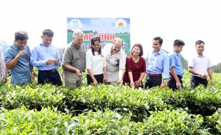 Các đại biểu tham quan mô hình sử dụng dinh dưỡng hữu cơ trên cây chè