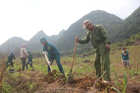 LLVT Thành phố tham gia giúp đồng bào bản Nậm Loỏng 2, phường Quyết Thắng đào hố trồng cây mận