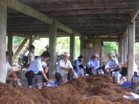 Đào tạo nghề đã góp phần nâng cao chất lượng nguồn nhân lực, chuyển đổi tư duy, phương thức sản xuất ở khu vực nông thôn