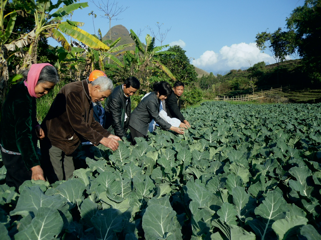 Tổ dân vận Tổ dân phố số 5 thăm mô hình trồng rau của gia đình bà Nghiêm Thị Bè