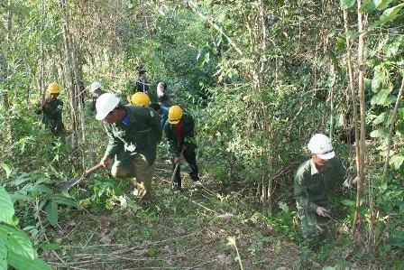 Bảo vệ, phát triển rừng góp phần phòng chống thiên tai, giữ gìn môi trường sinh thái