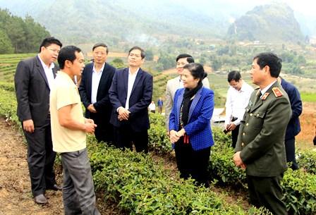 Đoàn công tác Ban Thường vụ Tỉnh ủy khảo sát thực địa diện tích trồng chè tuyết san tại bản Nậm Sáng (xã Phúc Than).