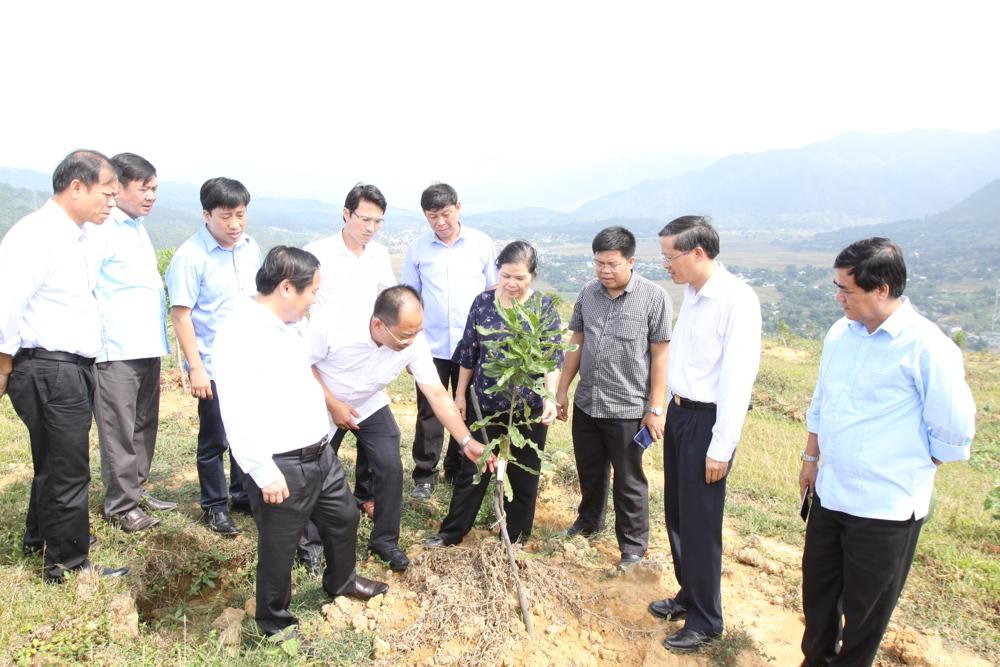 Đoàn công tác BTVTU kiểm tra tình hình trồng mắc ca của Công ty TNHH Him Lam Lai Châu (xã Mường Cang, huyện Than Uyên)