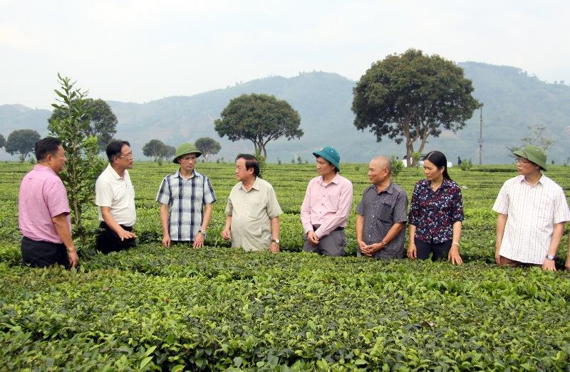 Đoàn công tác thăm quan cây mắc ca trồng xen chè tại thị trấn Tân Uyên (huyện Tân Uyên)